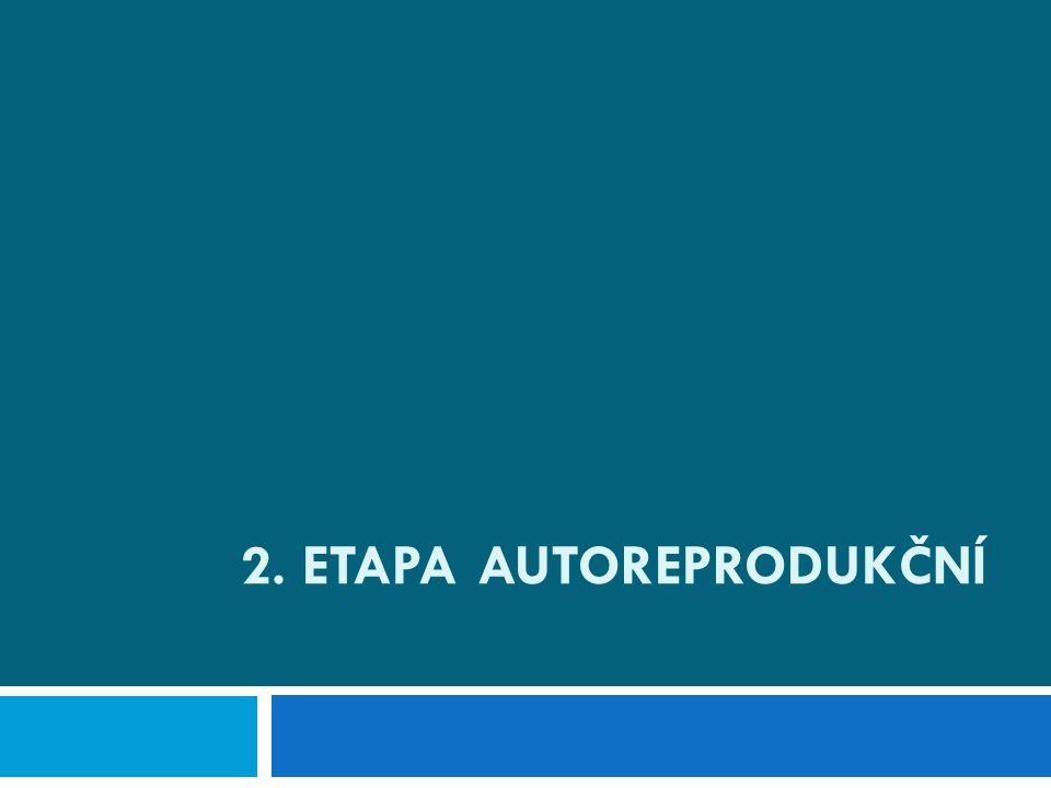 2. Etapa Autoreprodukční
