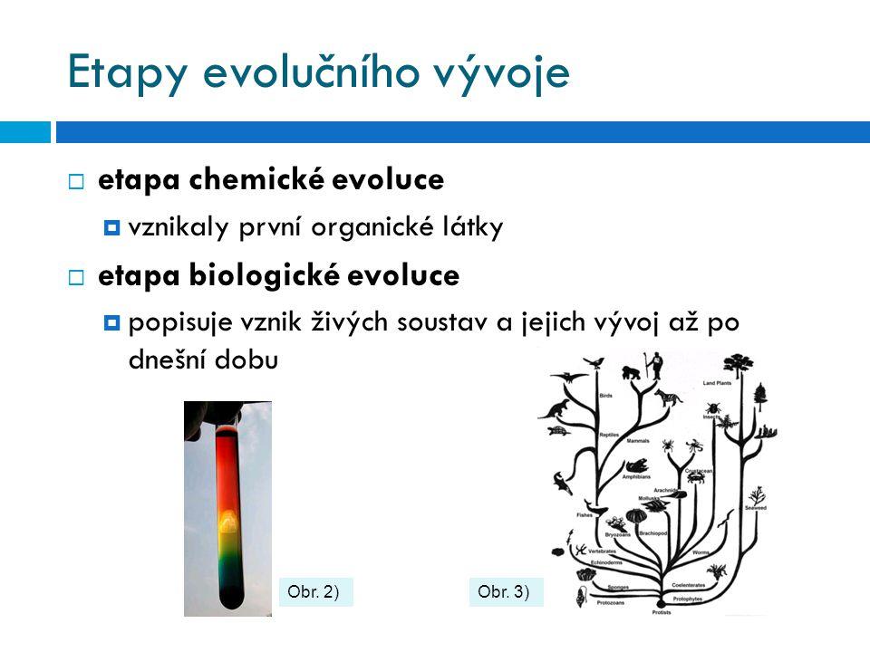 Etapy evolučního vývoje