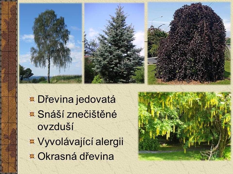 Dřevina jedovatá Snáší znečištěné ovzduší Vyvolávající alergii Okrasná dřevina