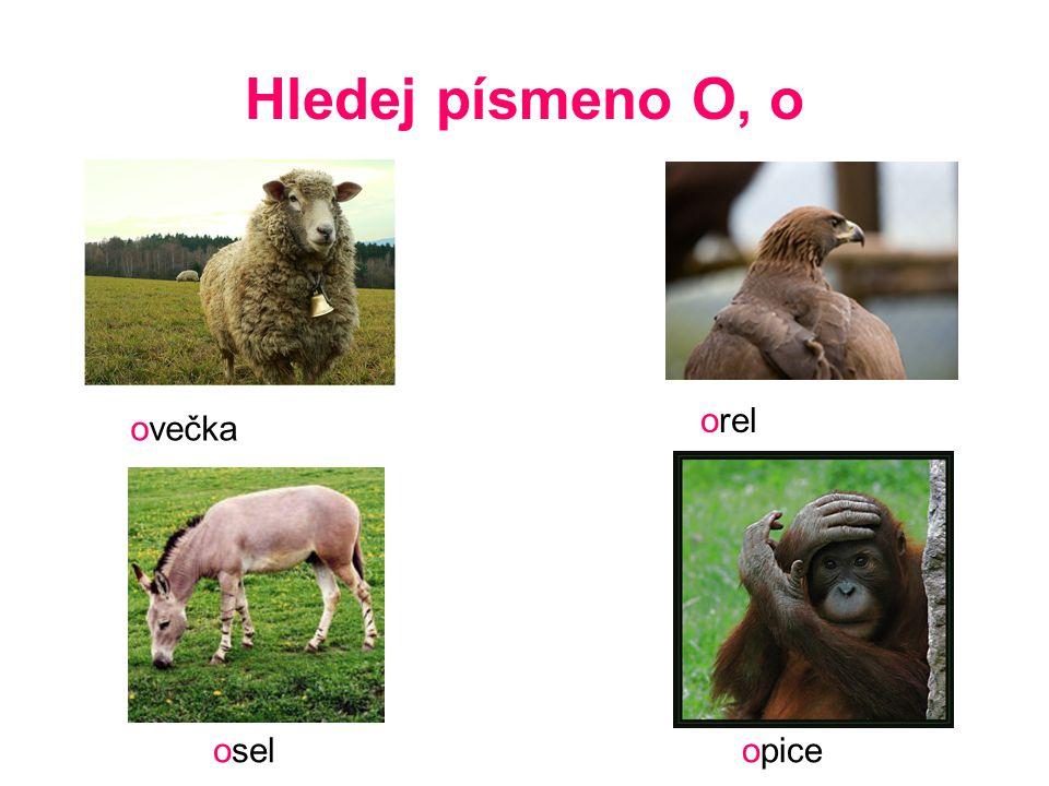 Hledej písmeno O, o orel ovečka osel opice