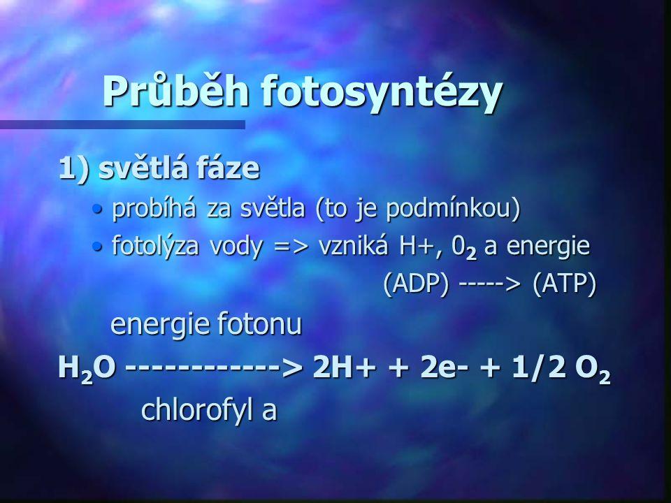Průběh fotosyntézy 1) světlá fáze energie fotonu