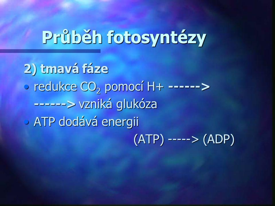 Průběh fotosyntézy 2) tmavá fáze redukce CO2 pomocí H+ ------>