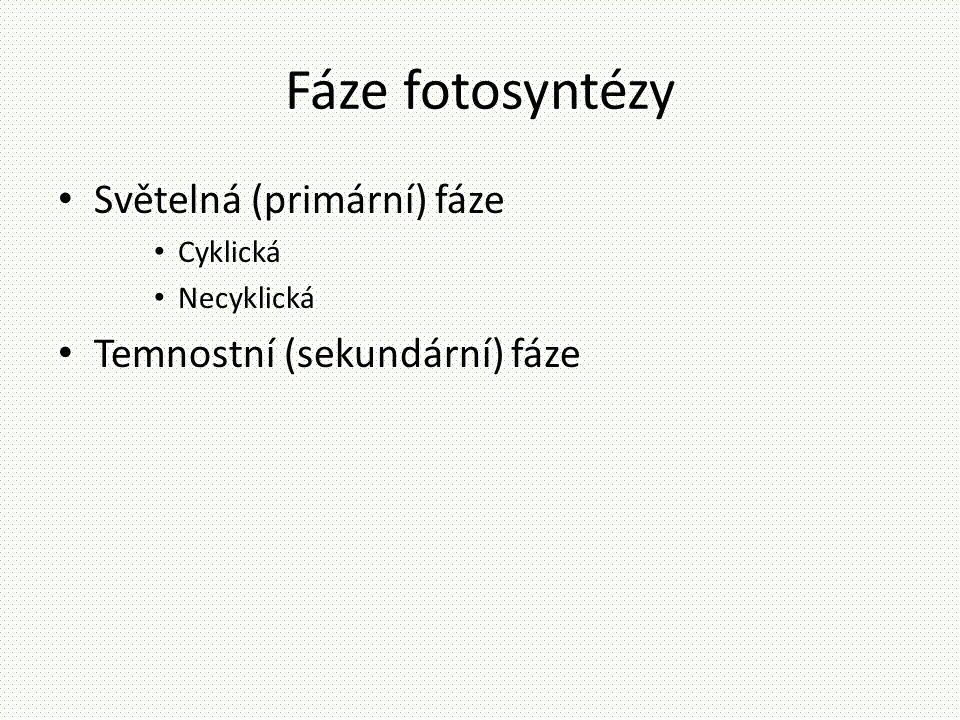 Fáze fotosyntézy Světelná (primární) fáze Temnostní (sekundární) fáze