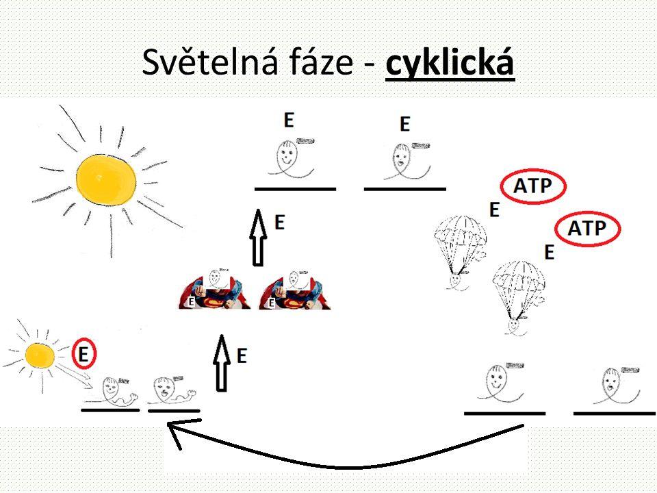 Světelná fáze - cyklická
