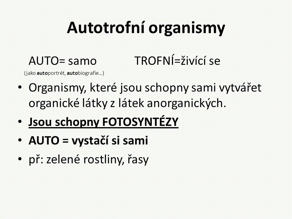 Autotrofní organismy AUTO= samo TROFNÍ=živící se