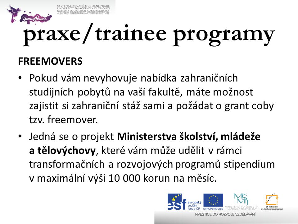 praxe/trainee programy
