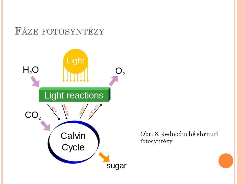 Fáze fotosyntézy Obr. 3. Jednoduché shrnutí fotosyntézy