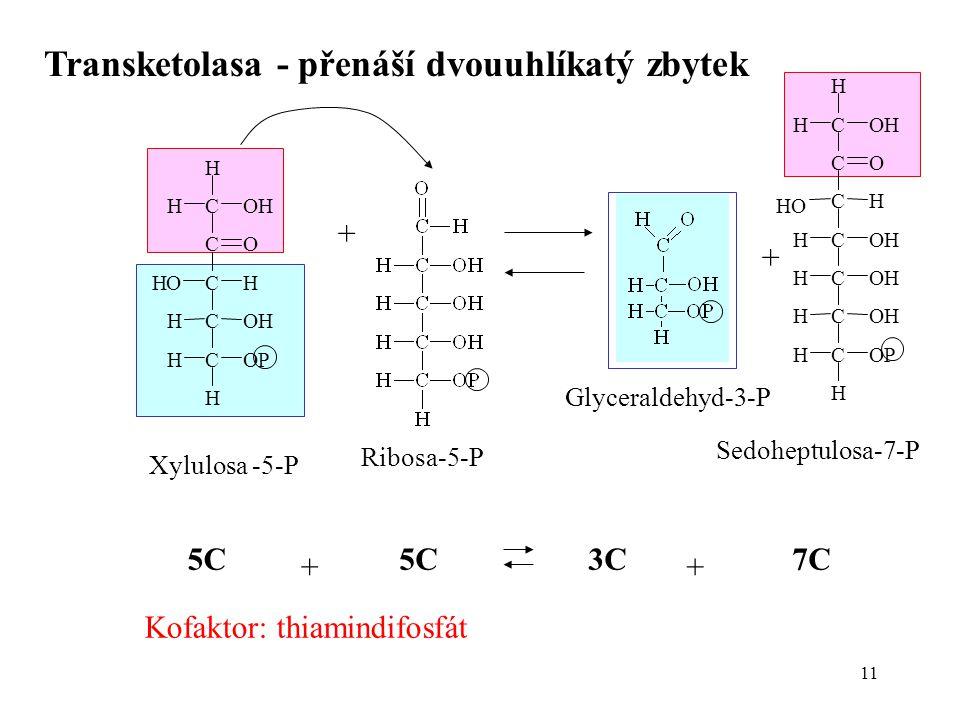 Transketolasa - přenáší dvouuhlíkatý zbytek