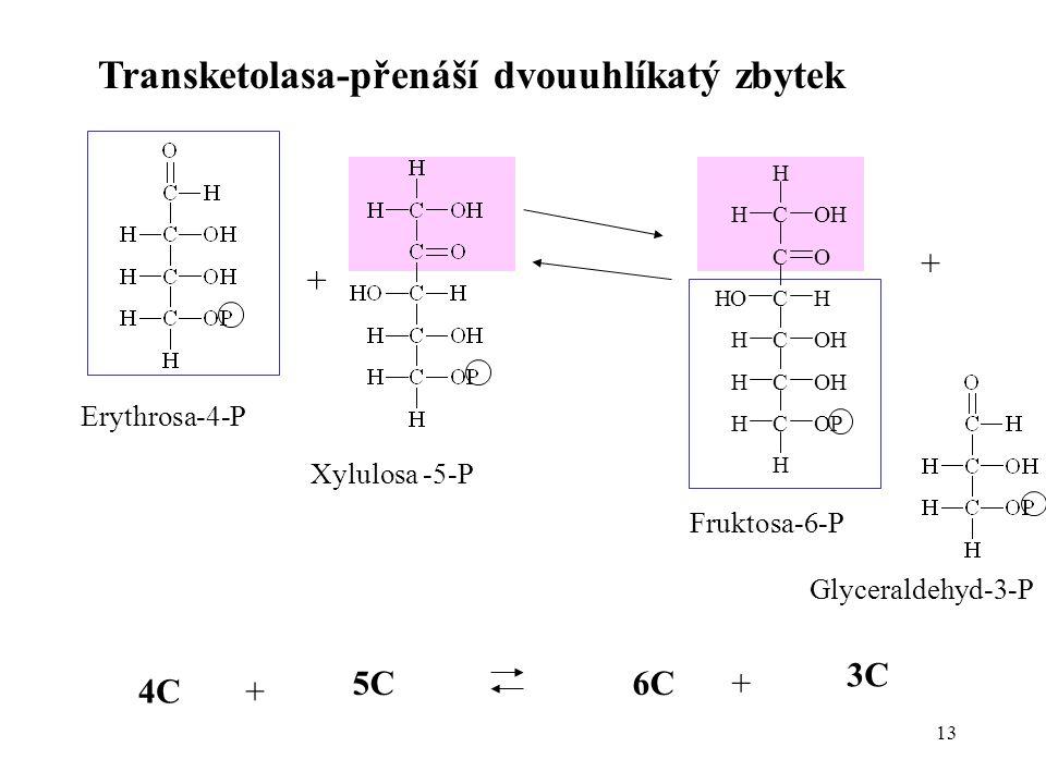 Transketolasa-přenáší dvouuhlíkatý zbytek