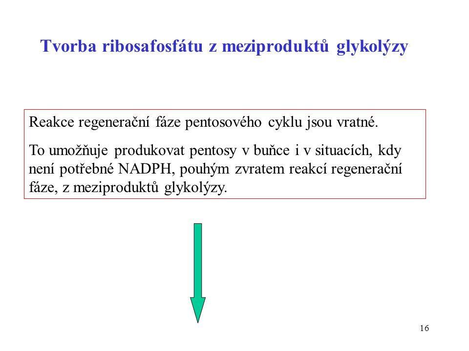 Tvorba ribosafosfátu z meziproduktů glykolýzy