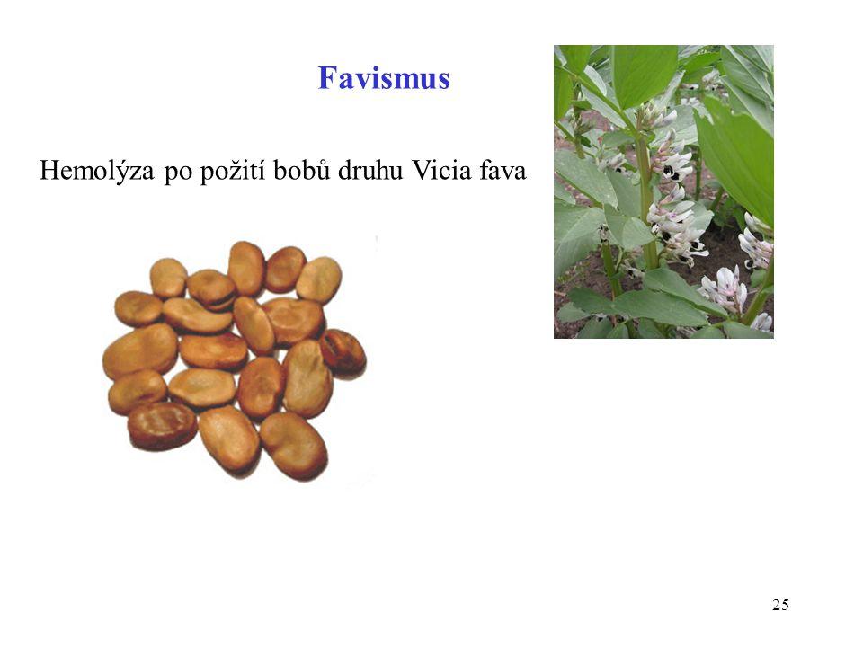 Favismus Hemolýza po požití bobů druhu Vicia fava