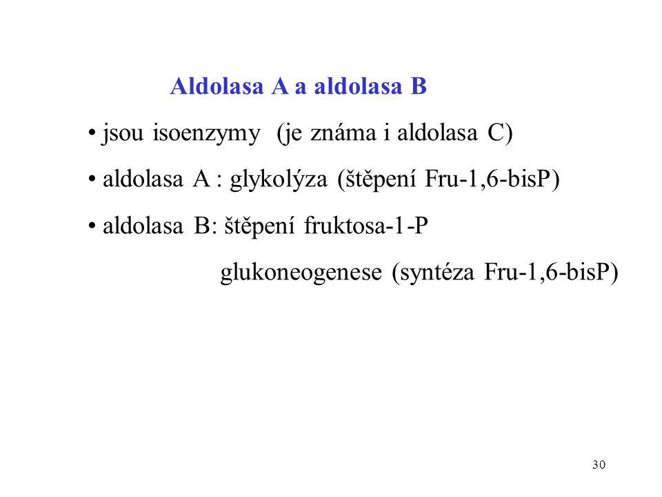 Aldolasa A a aldolasa B jsou isoenzymy (je známa i aldolasa C) aldolasa A : glykolýza (štěpení Fru-1,6-bisP)
