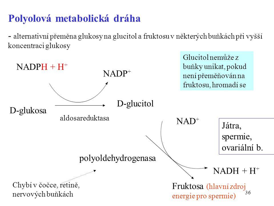 Polyolová metabolická dráha