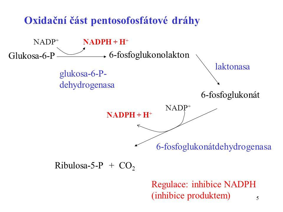Oxidační část pentosofosfátové dráhy