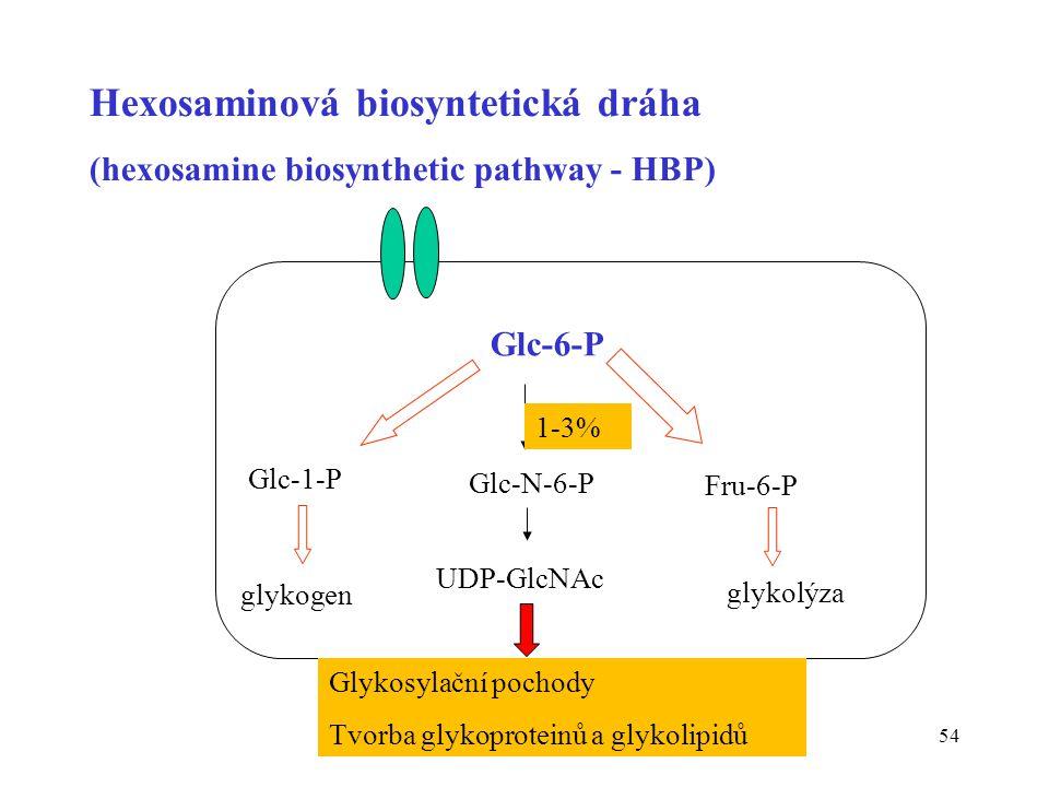 Hexosaminová biosyntetická dráha