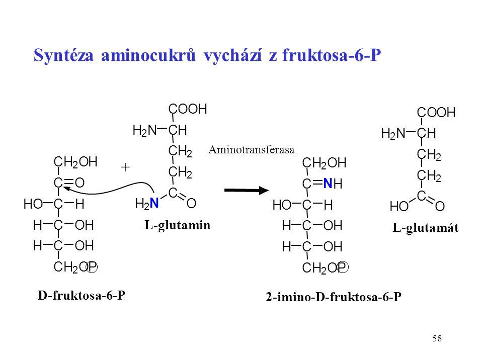 Syntéza aminocukrů vychází z fruktosa-6-P