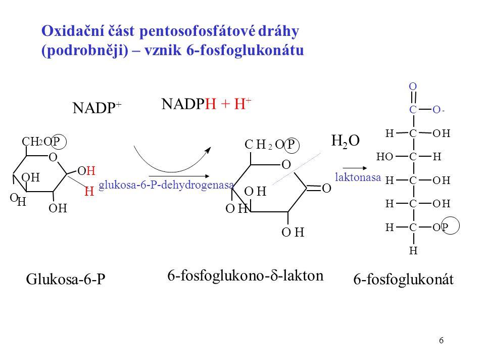 6-fosfoglukono--lakton Glukosa-6-P 6-fosfoglukonát