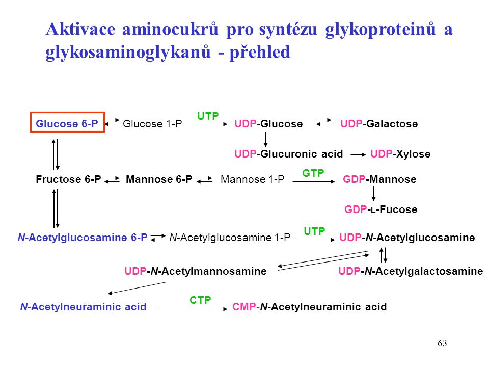 Aktivace aminocukrů pro syntézu glykoproteinů a glykosaminoglykanů - přehled