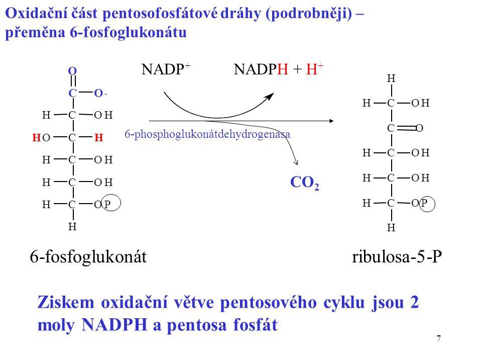 6-fosfoglukonát ribulosa-5-P