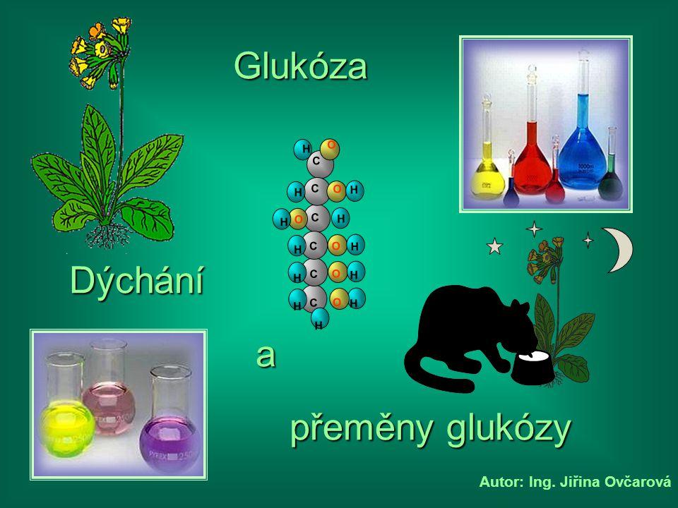 Glukóza C H O Dýchání a přeměny glukózy Autor: Ing. Jiřina Ovčarová