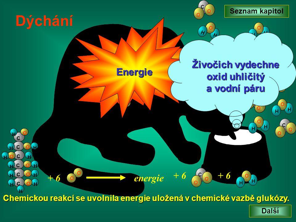 Živočich vydechne oxid uhličitý