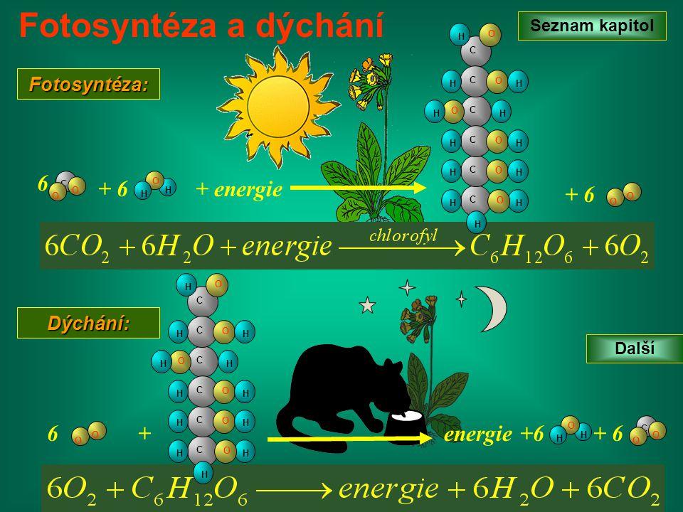 Fotosyntéza a dýchání 6 + 6 + energie + 6 6 + energie +6 + 6