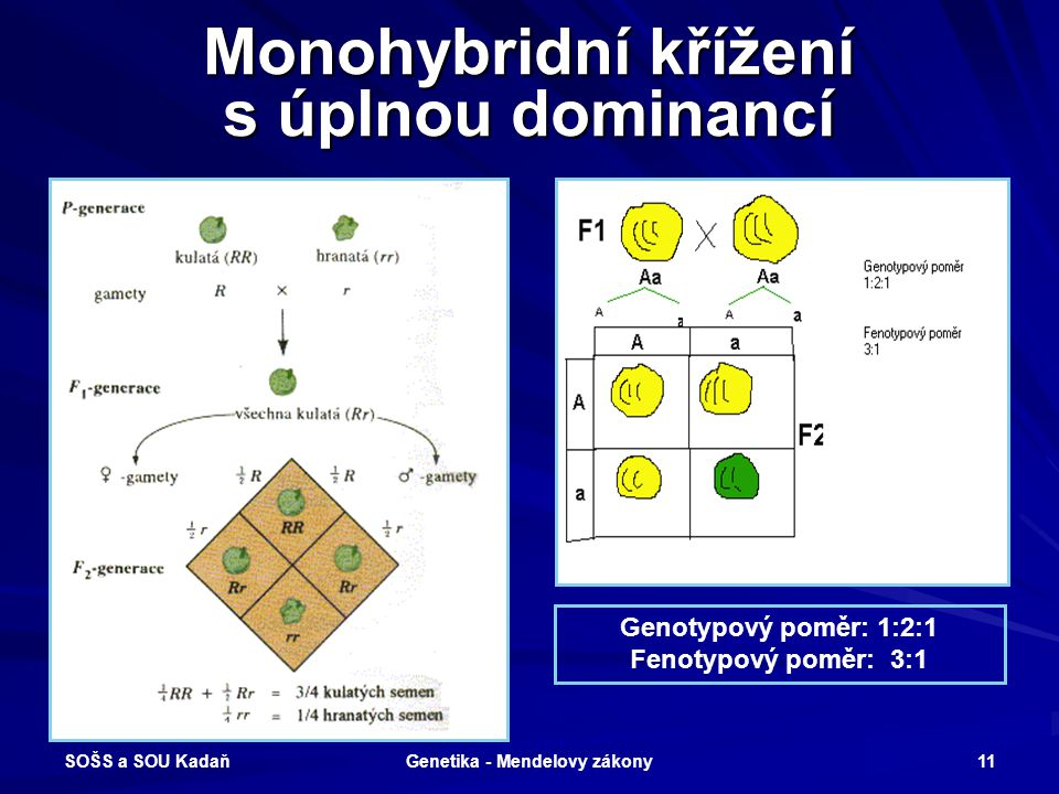 Monohybridní křížení s úplnou dominancí