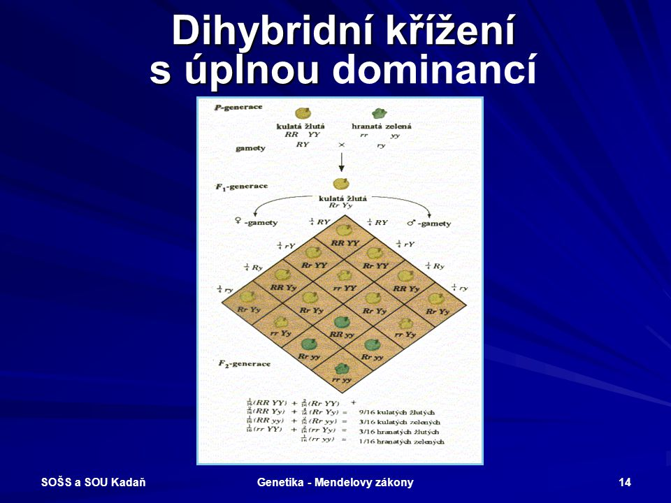Dihybridní křížení s úplnou dominancí
