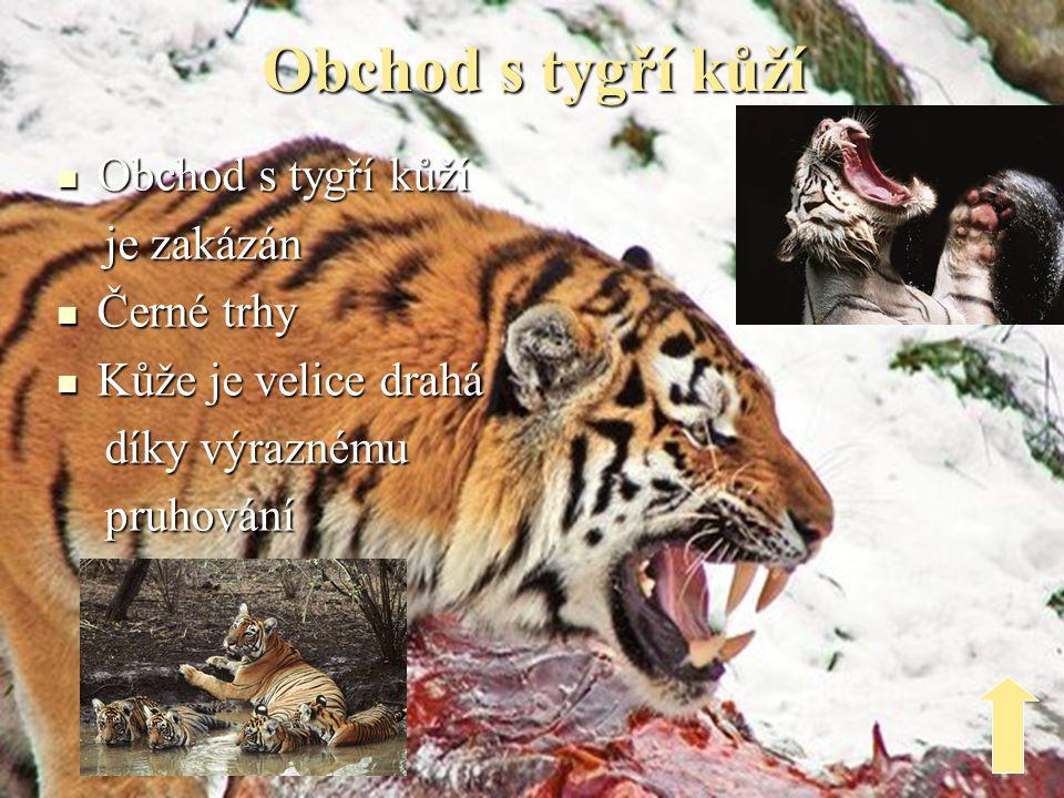 Obchod s tygří kůží Obchod s tygří kůží je zakázán Černé trhy