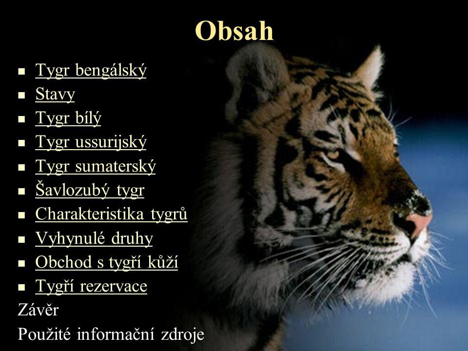 Obsah Tygr bengálský Stavy Tygr bílý Tygr ussurijský Tygr sumaterský