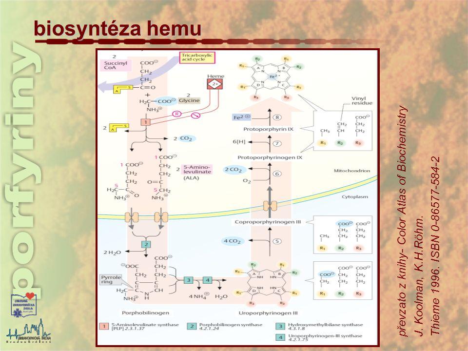 biosyntéza hemu převzato z knihy- Color Atlas of Biochemistry