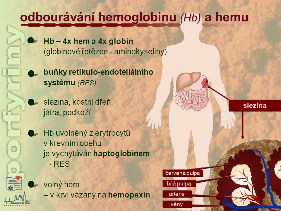 odbourávání hemoglobinu (Hb) a hemu