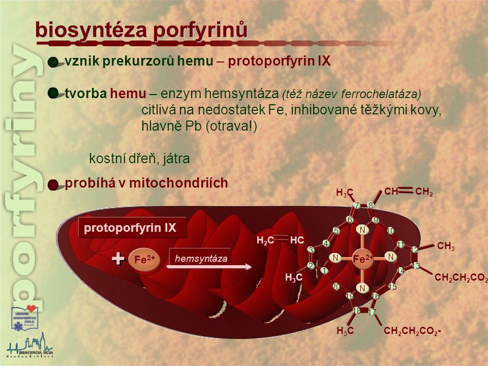 + biosyntéza porfyrinů vznik prekurzorů hemu – protoporfyrin IX