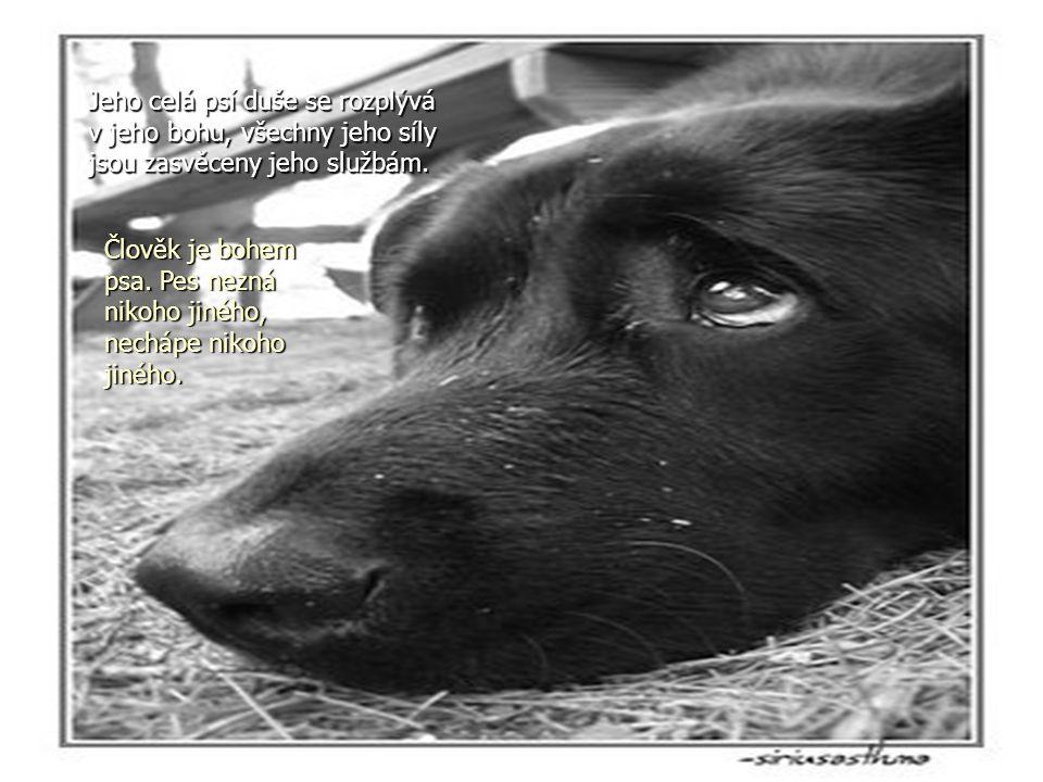 Jeho celá psí duše se rozplývá v jeho bohu, všechny jeho síly jsou zasvěceny jeho službám.