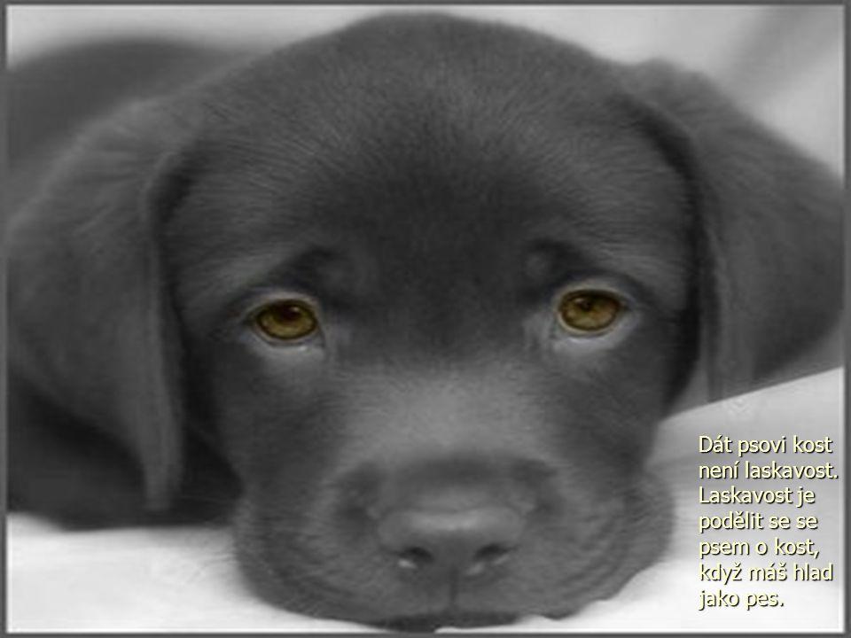 Dát psovi kost není laskavost