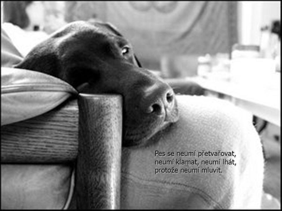 Pes se neumí přetvařovat, neumí klamat, neumí lhát, protože neumí mluvit.