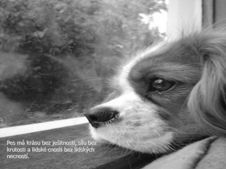 Pes má krásu bez ješitnosti, sílu bez krutosti a lidské cnosti bez lidských necností.