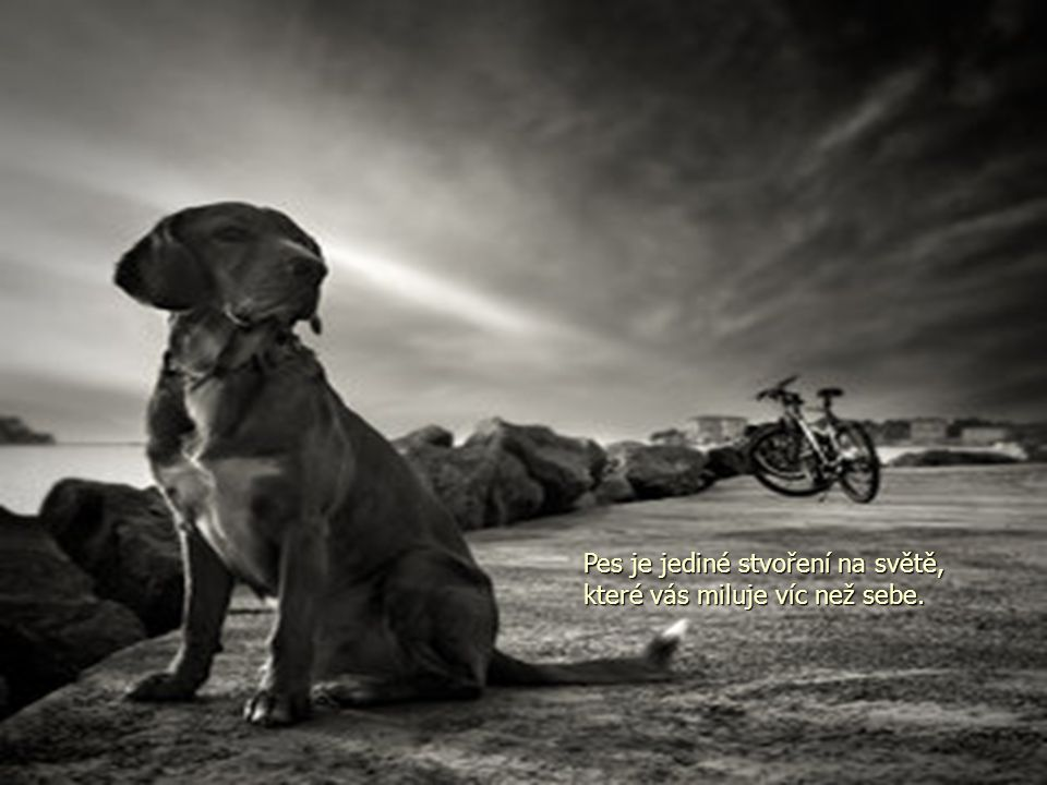 Pes je jediné stvoření na světě, které vás miluje víc než sebe.