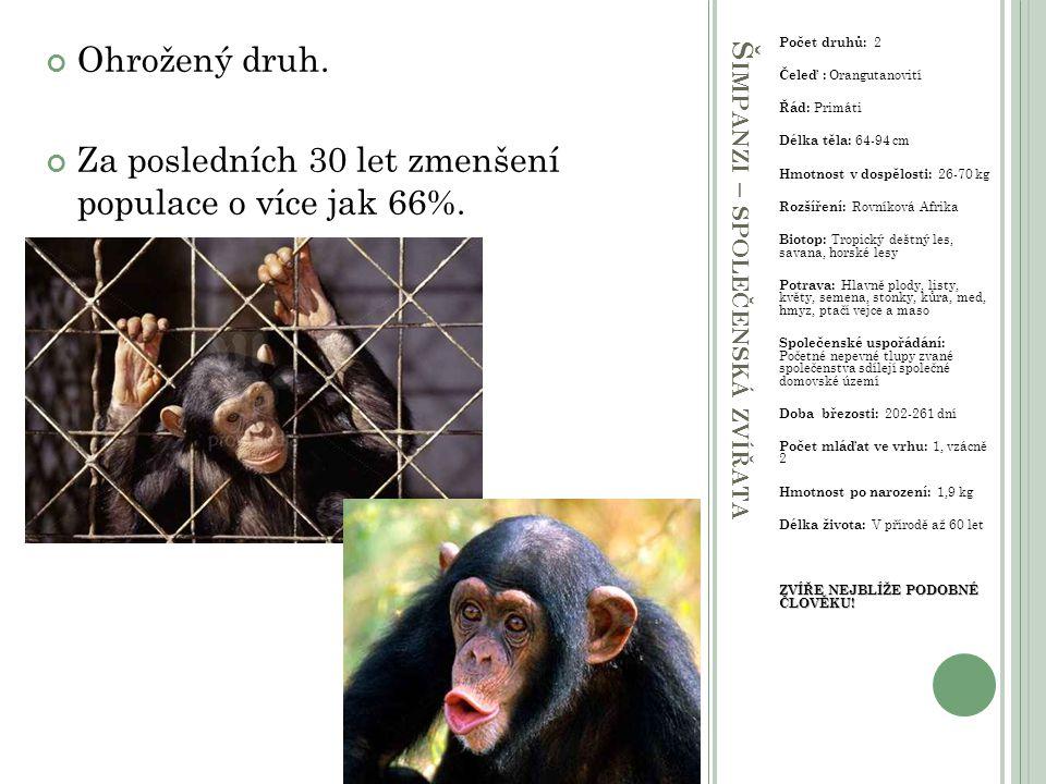 Šimpanzi – společenská zvířata
