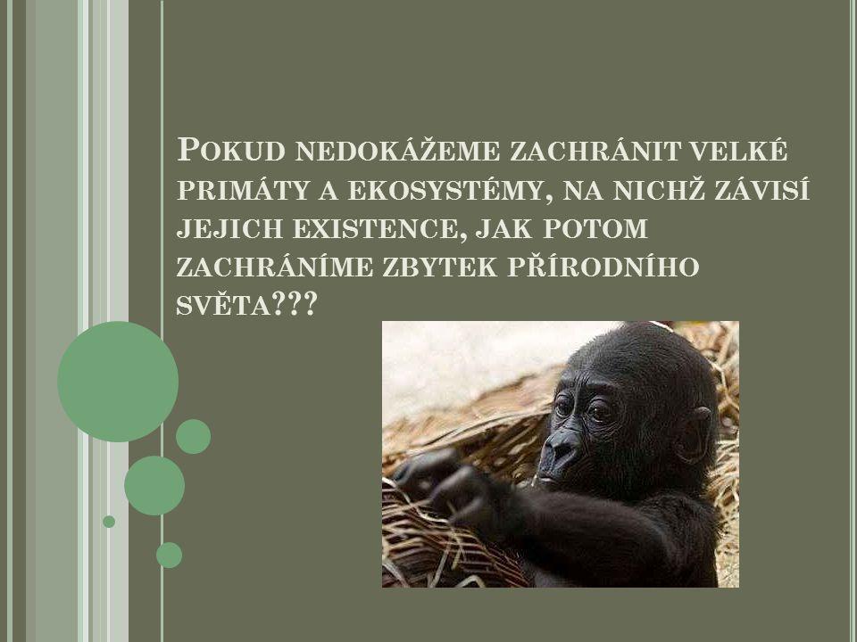 Pokud nedokážeme zachránit velké primáty a ekosystémy, na nichž závisí jejich existence, jak potom zachráníme zbytek přírodního světa