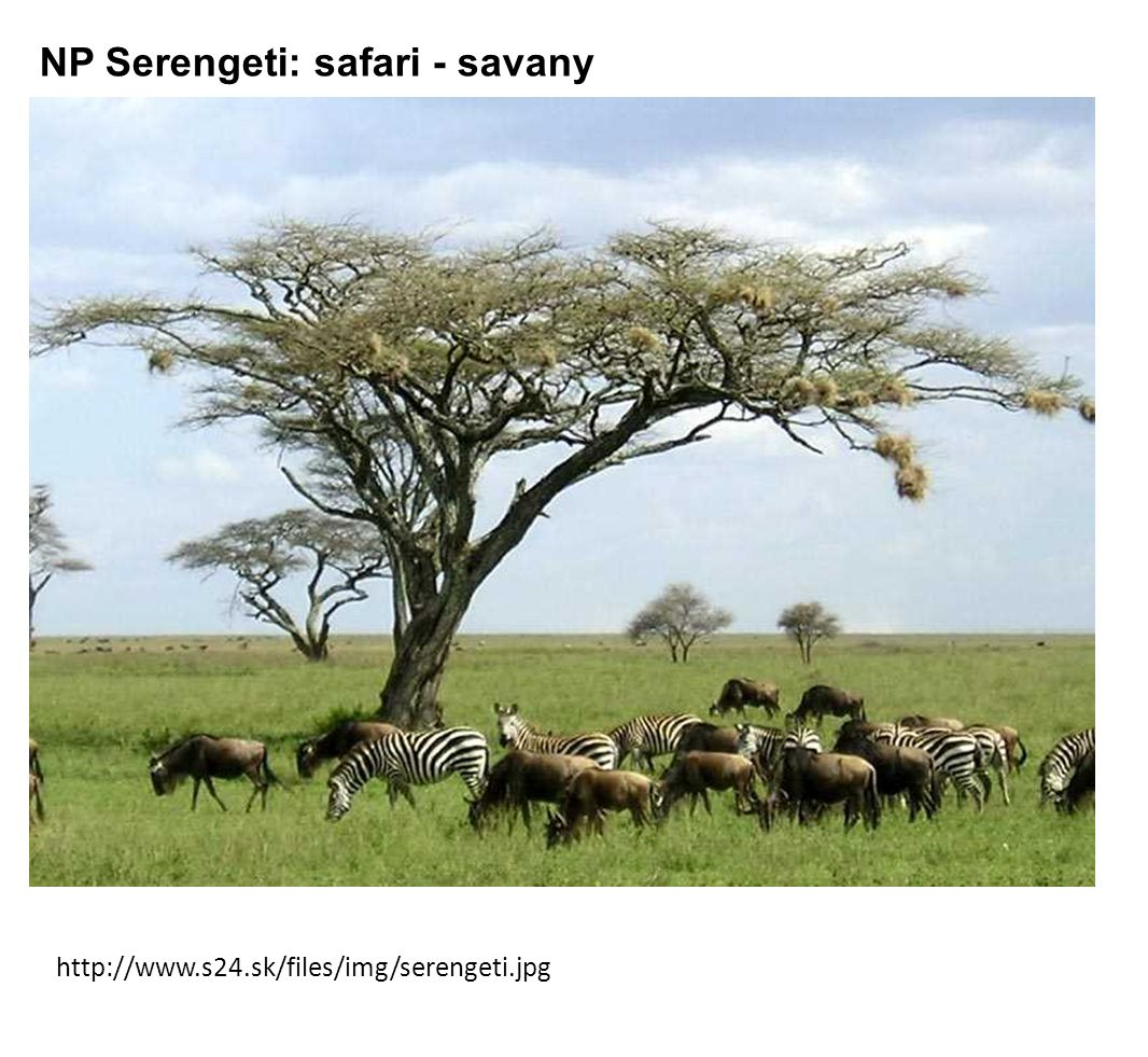 NP Serengeti: safari - savany