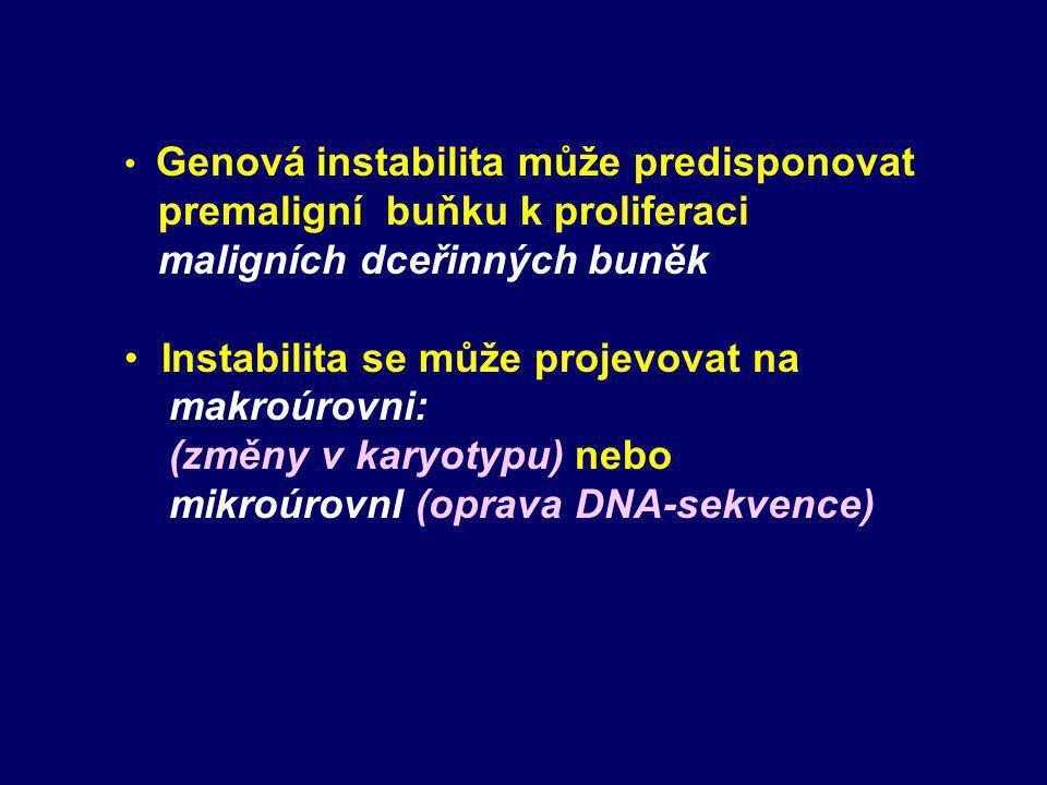 Genová instabilita může predisponovat premaligní buňku k proliferaci maligních dceřinných buněk