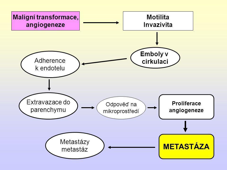 METASTÁZA Maligní transformace, angiogeneze Motilita Invazivita