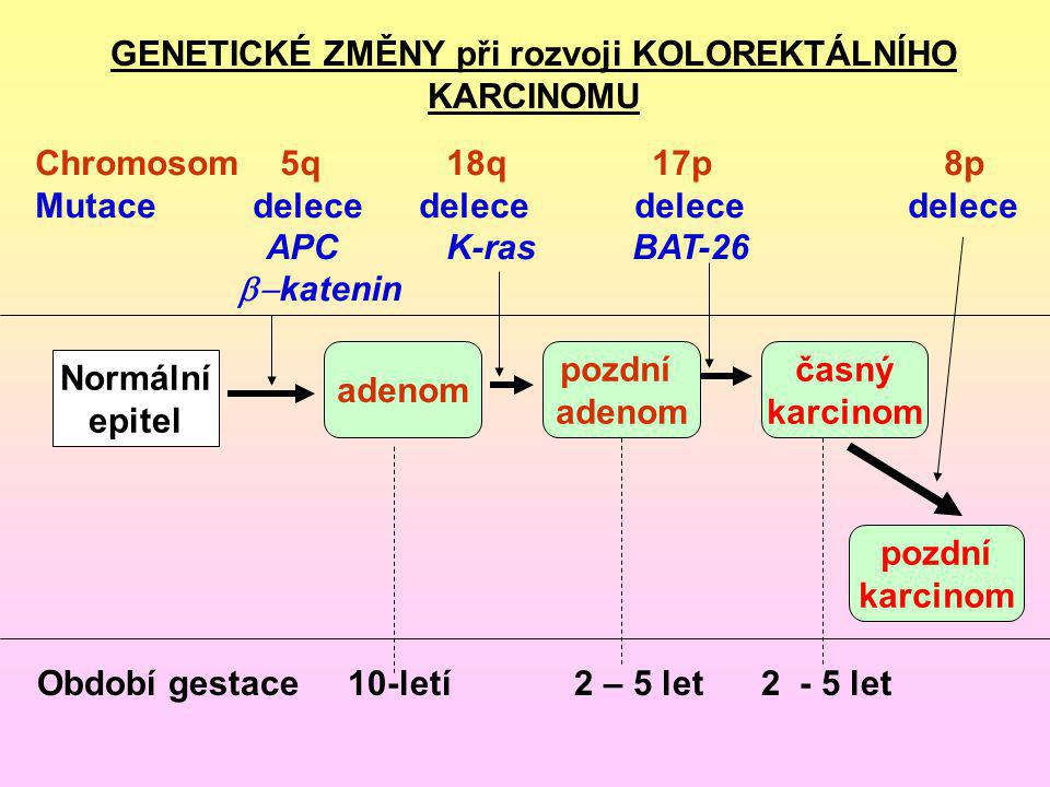 GENETICKÉ ZMĚNY při rozvoji KOLOREKTÁLNÍHO