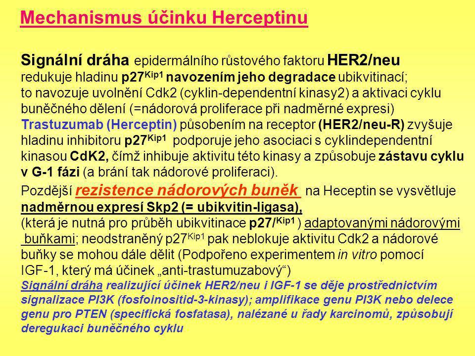 Mechanismus účinku Herceptinu