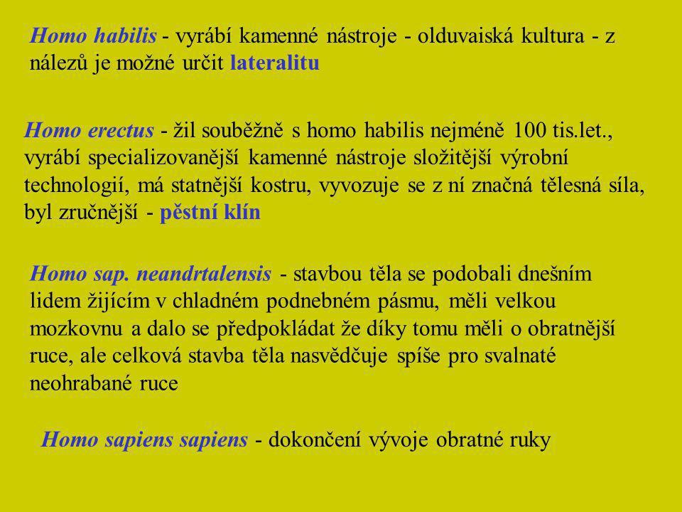 Homo habilis - vyrábí kamenné nástroje - olduvaiská kultura - z nálezů je možné určit lateralitu