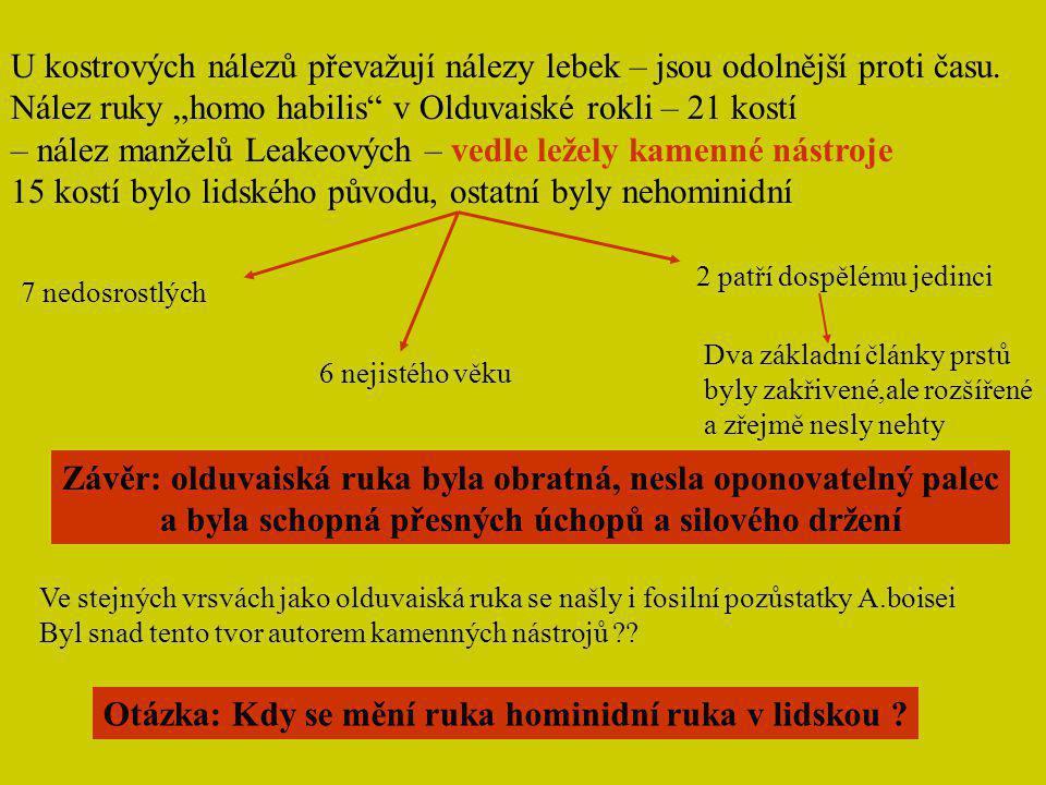 """Nález ruky """"homo habilis v Olduvaiské rokli – 21 kostí"""