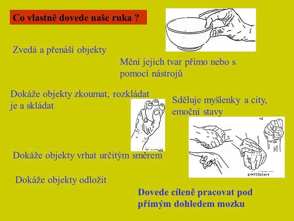 Co vlastně dovede naše ruka