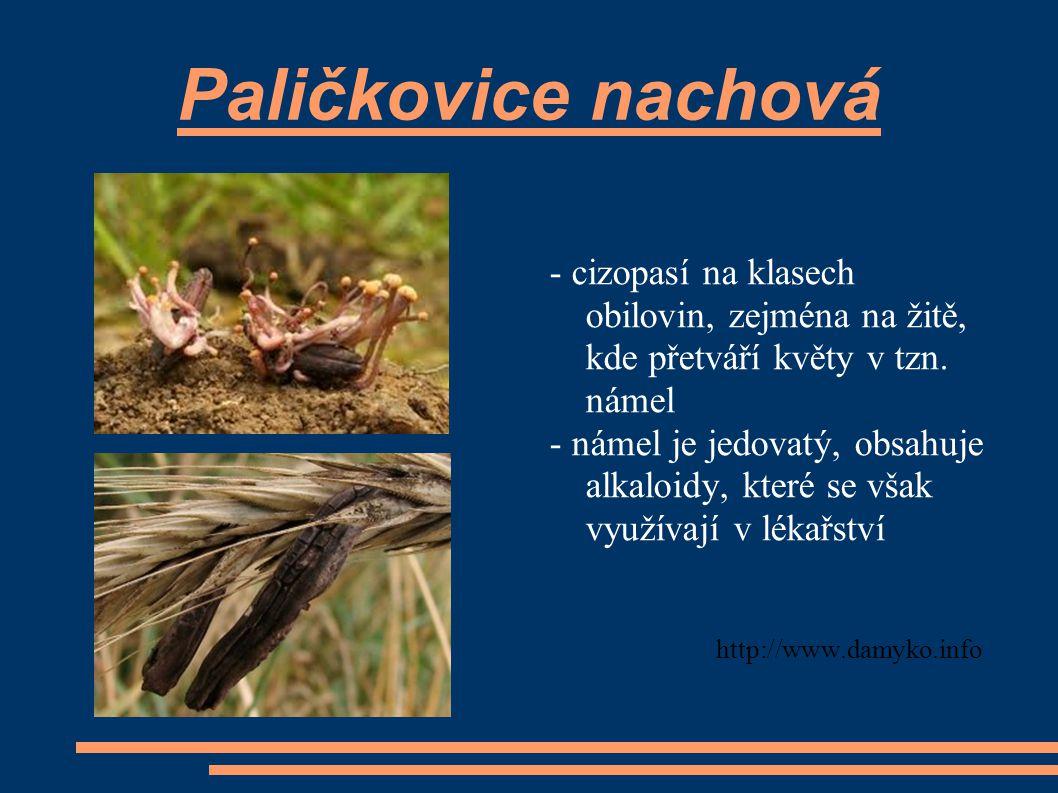 Paličkovice nachová - cizopasí na klasech obilovin, zejména na žitě, kde přetváří květy v tzn. námel.