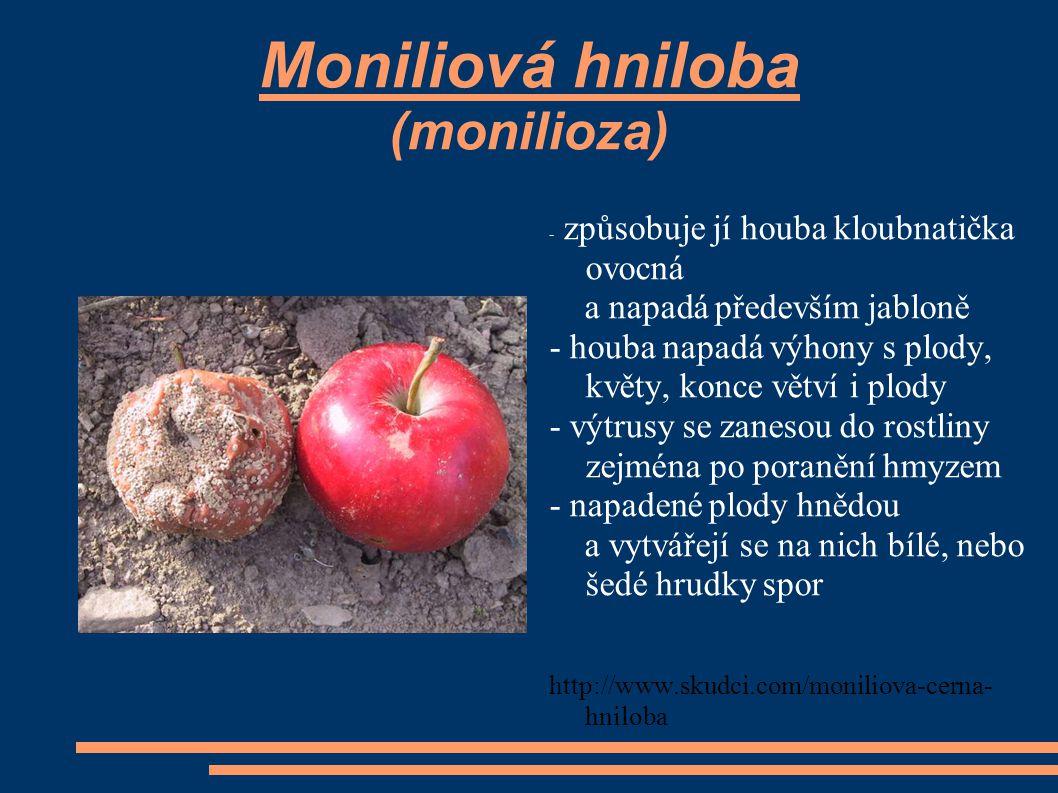 Moniliová hniloba (monilioza)
